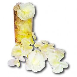 pétales de roses blanches
